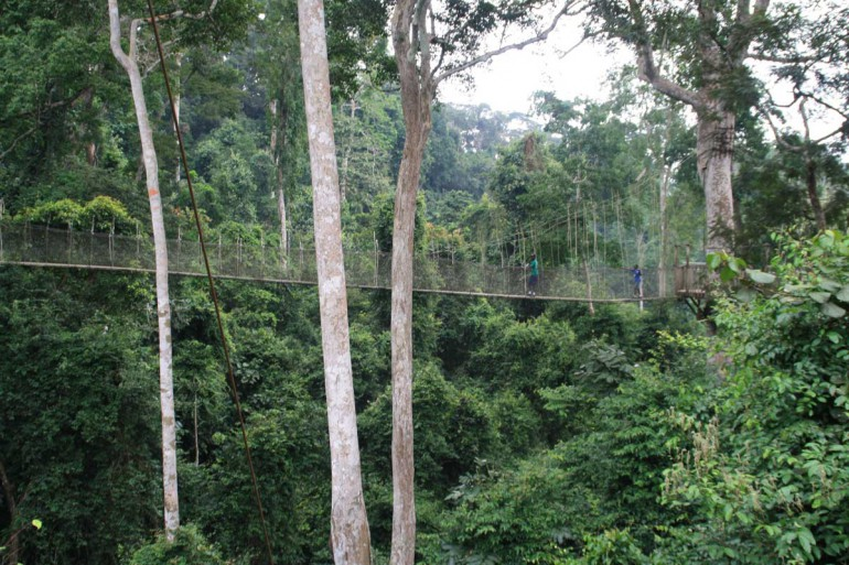 Ghana Canopy Walkway