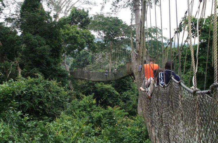 Ghana Canopy-Walkway