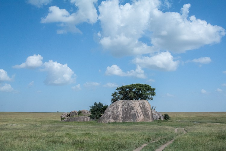 Kopjes in der Zentral-Serengeti