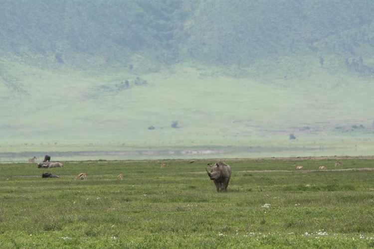 Der Hauptgewinn: die Sichtung von Nashörner!