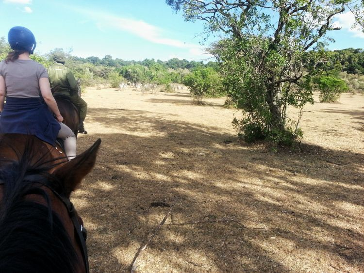 GoOnTravel.de Ausritt zu den Zebras