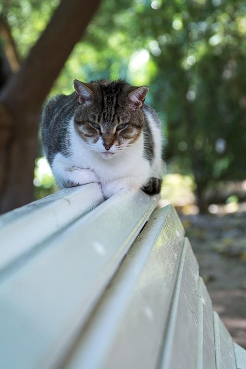 zwischen Katzen und Pflanzen