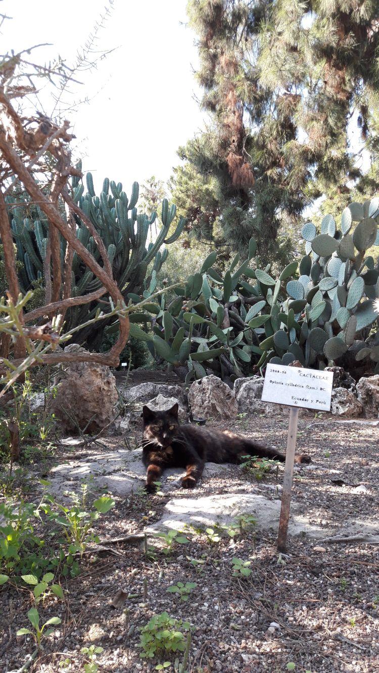 ein Bewohner des Botanischen Gartens