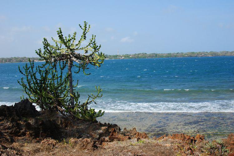 Blick von Wasini Island