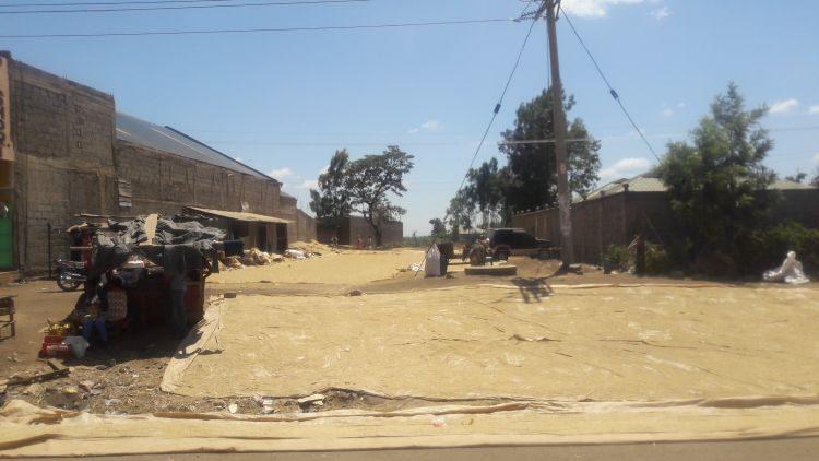 Reis trocknet am Straßenrand