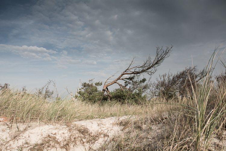 Windflüchter am Darsser Ort
