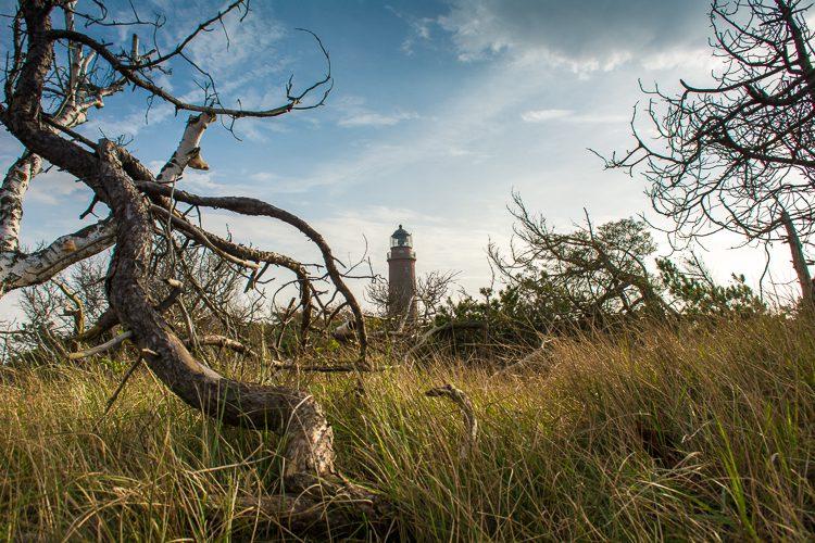 Windflüchter und Leuchtturm