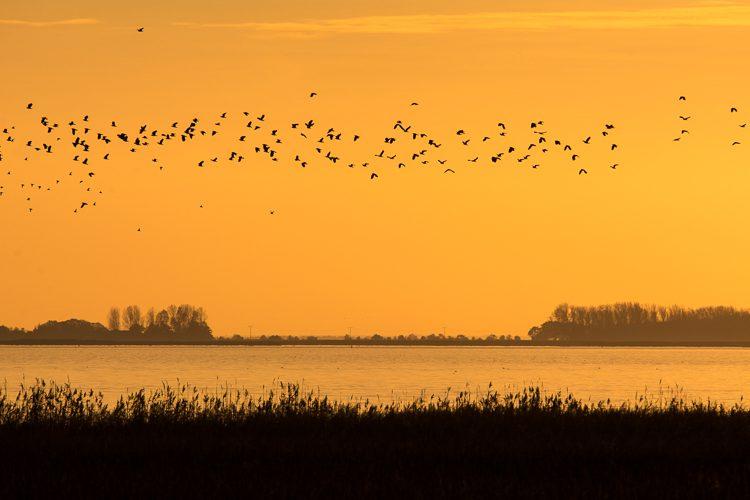 Vogelflug zur Dämmerung