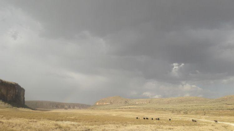 Büffel und Regen voaraus!