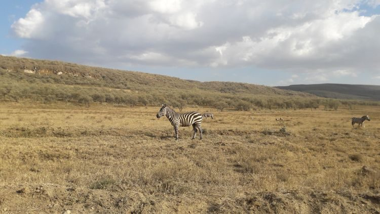 Zebras in Hell´s Gate
