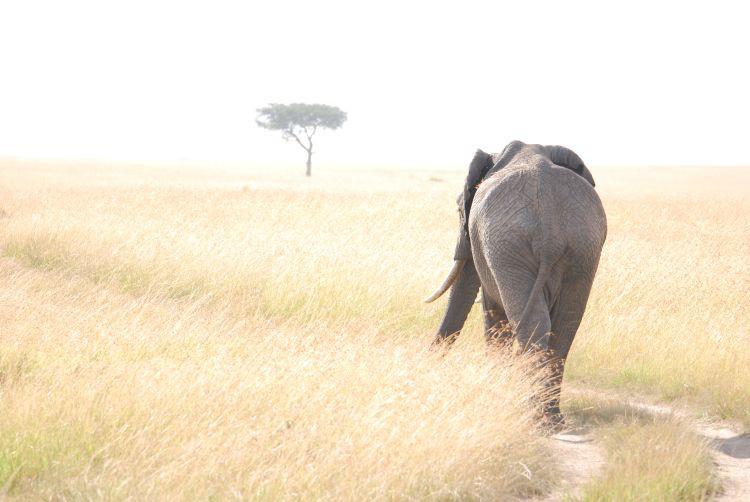 auf dem Fuße des Elefanten