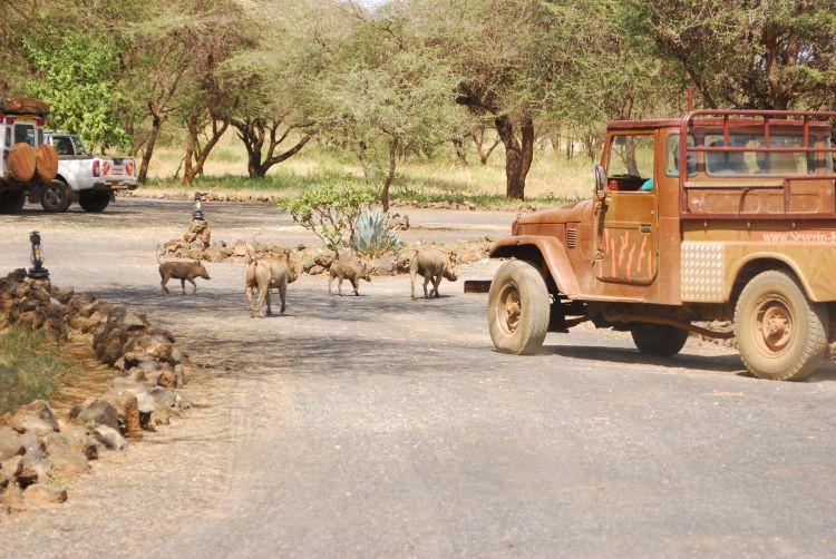 Pumba (Swahili für Warzenschwein) im Camp