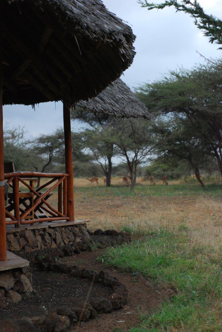 Impalas vor meinem Zelt