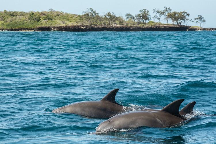 Delfine über Wasser im Marinepark
