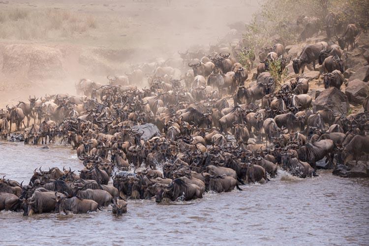 GoOnTravel.de: Stau am Mara River