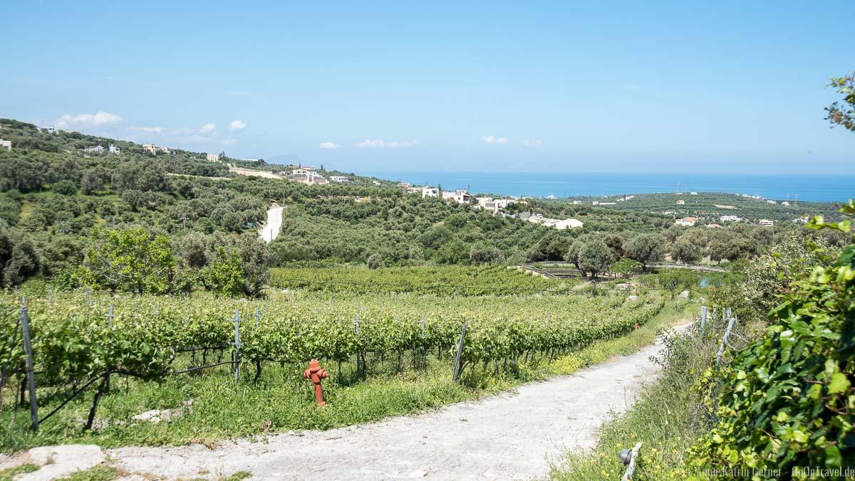 Rebstöcke und Olivenbäume auf der Agreco Farm