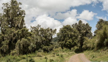 Safari Geheimtipp: Meru und Aberdare Nationalpark in Kenia