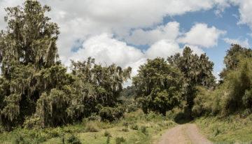 Safari Geheimtipp: Meru und Aberdare Nationalpark in Kenia