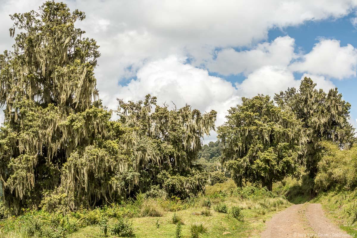 typisches Landschaftsbild im Aberdare Nationalpark