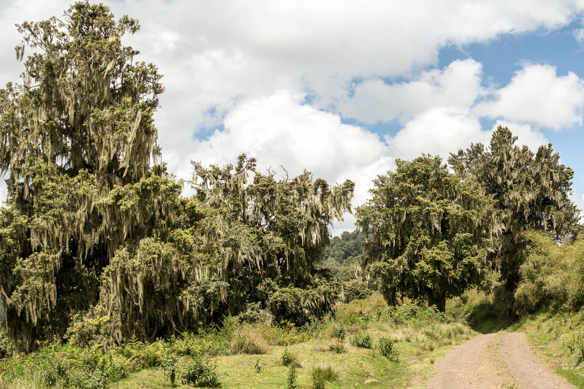 Aberdares Nationalpark Kenia