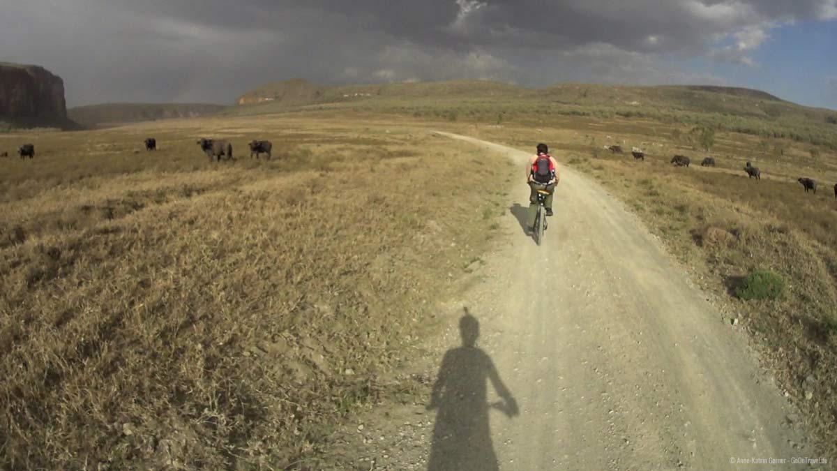 Mit der Action Cam am Helm durch die Büffelherde radeln.