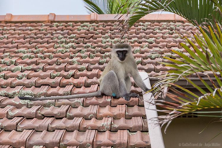 Besuch auf dem Dach in Durban