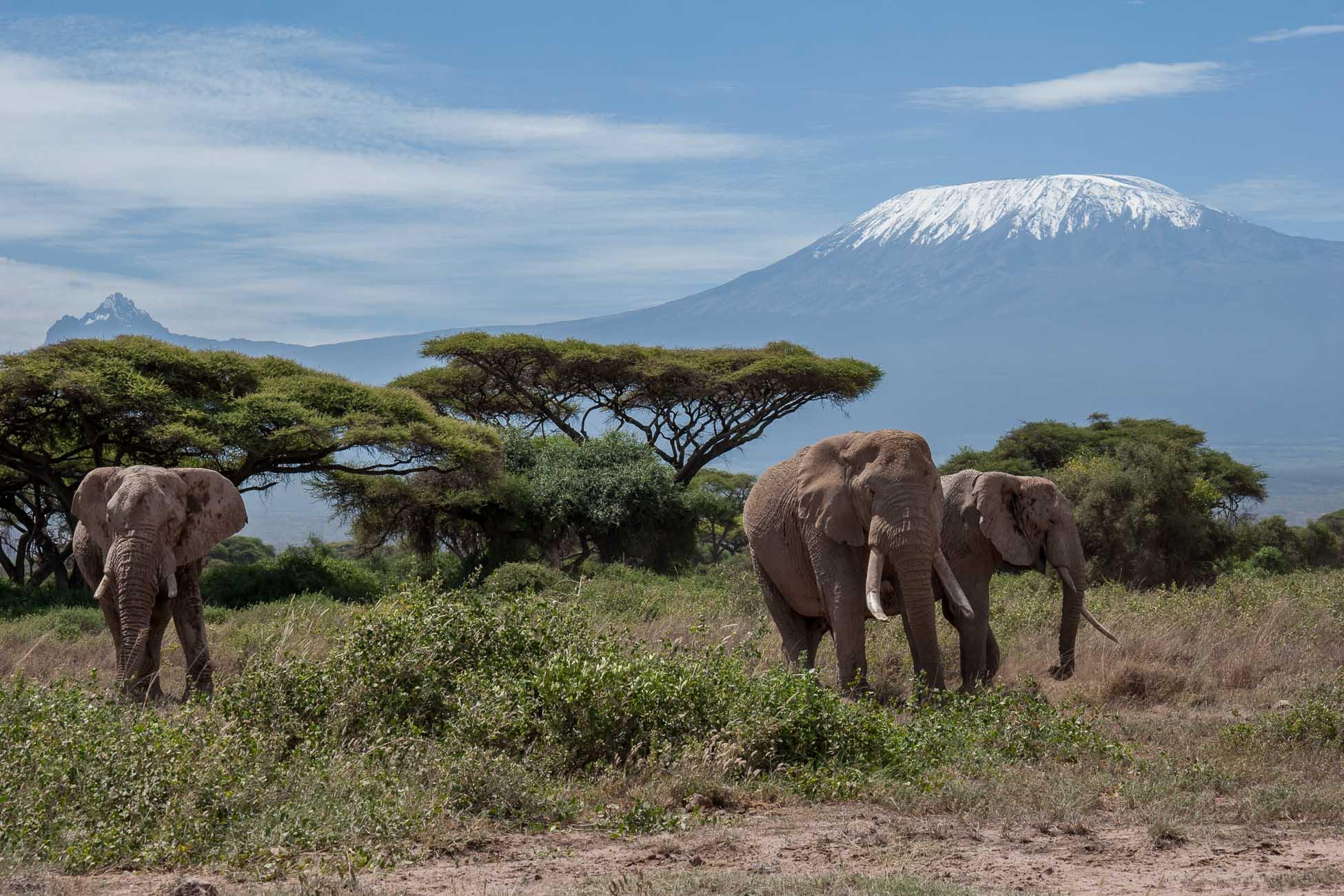 Amboseli Elefanten Safari richtig planen