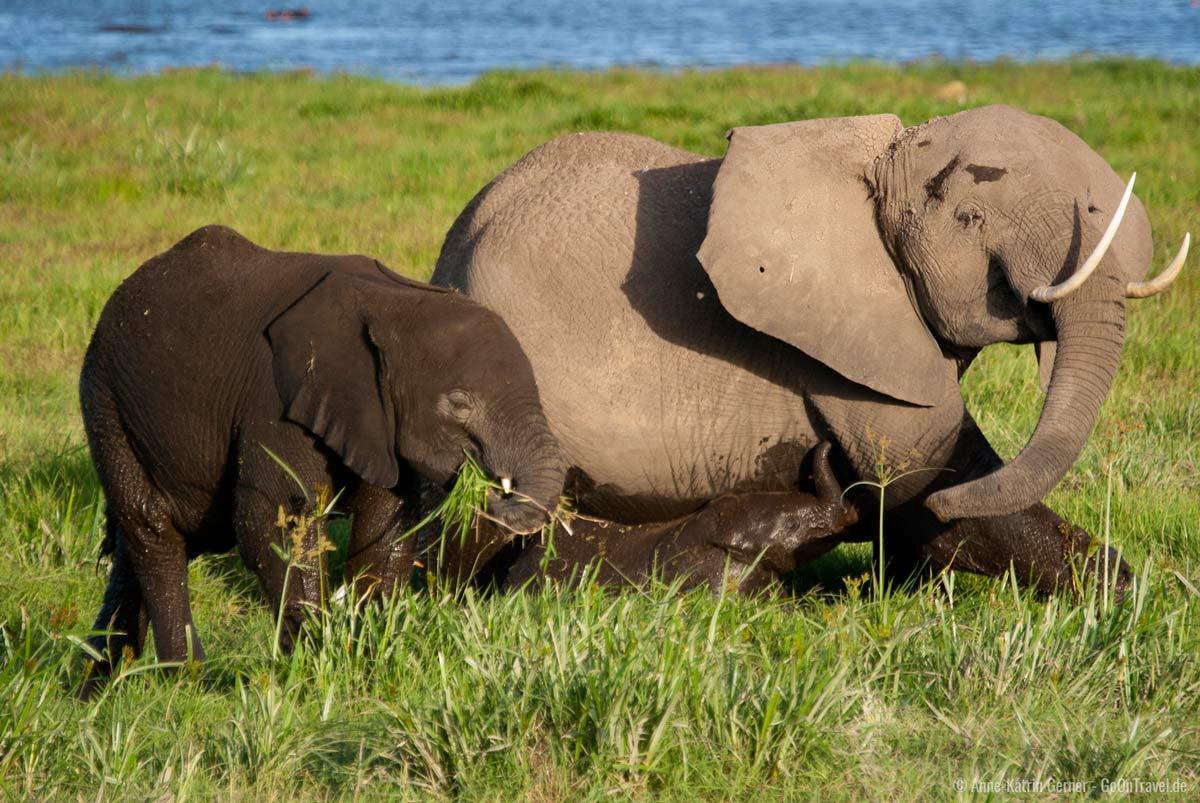 Elefantenfamilie im Amboseli NP
