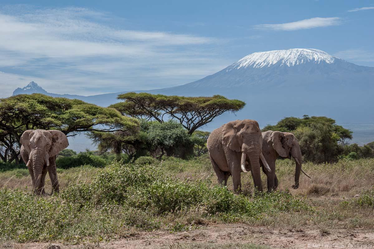 Der schönste Nationalpark von Kenia - Elefanten vor dem Kilimandscharo im Amboseli