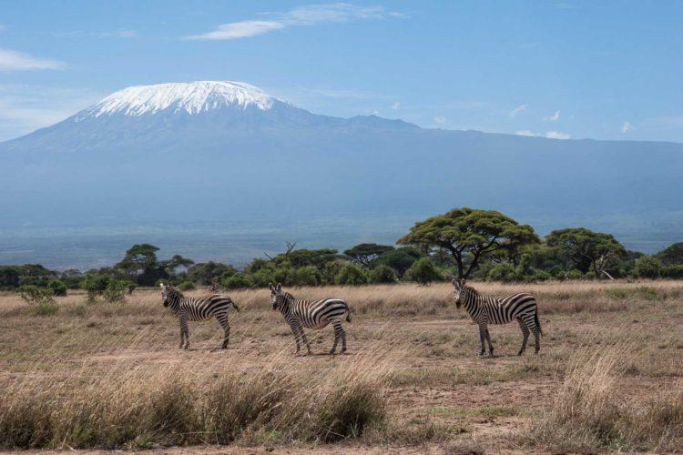 Amboseli Nationalpark Kilimanscharo Safari