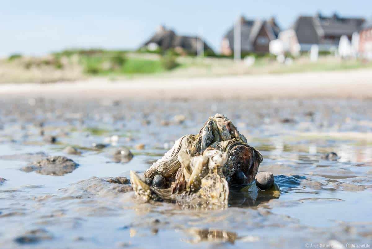 Nicht nur Muscheln und Austern finden sich im Watt