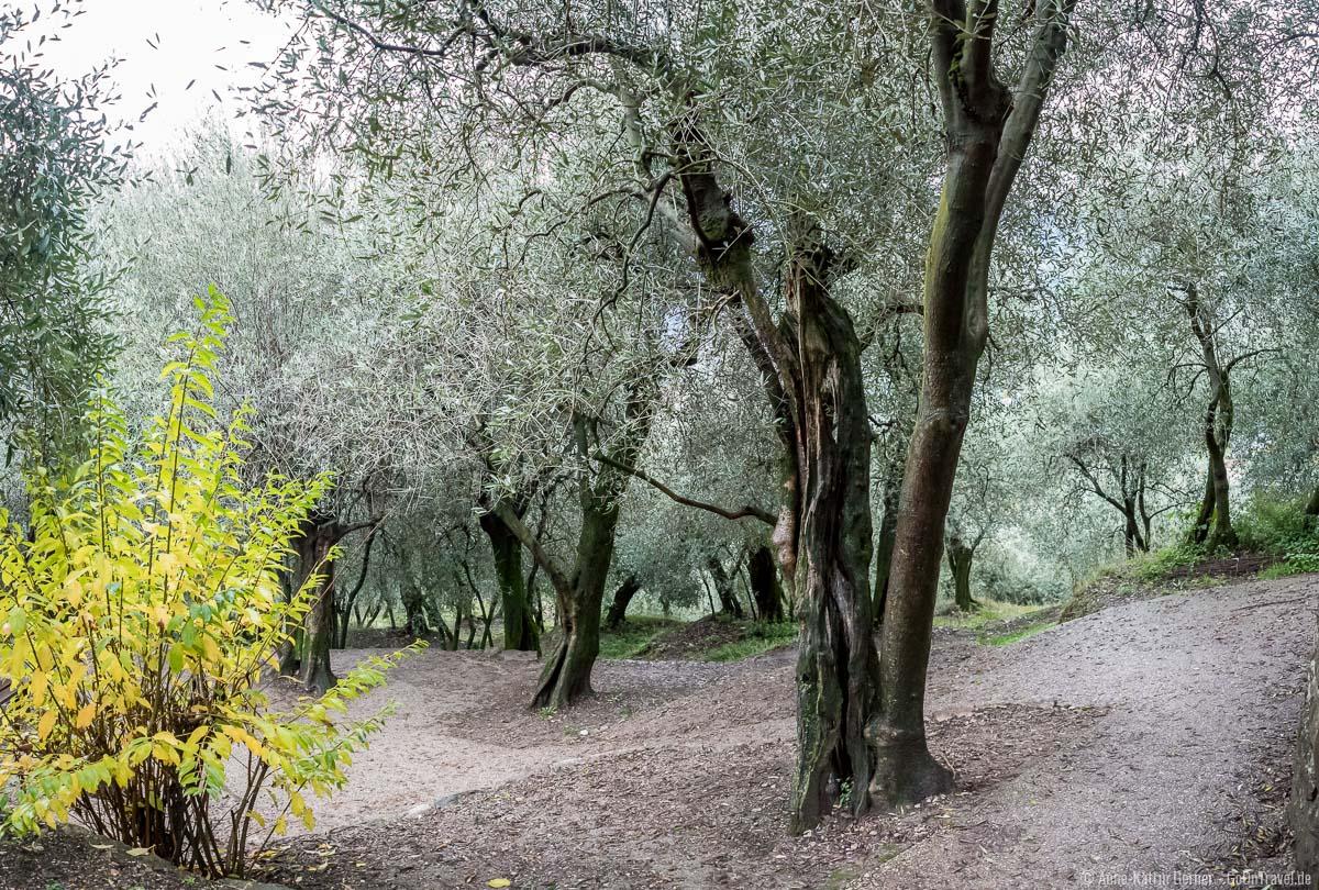 Durch Olivenhaine führt der Weg zur Burg
