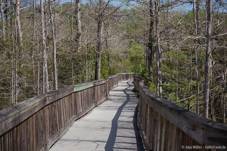 Ein Weg durch die Sumpfzypressen im Kirby Storter Roadside Park