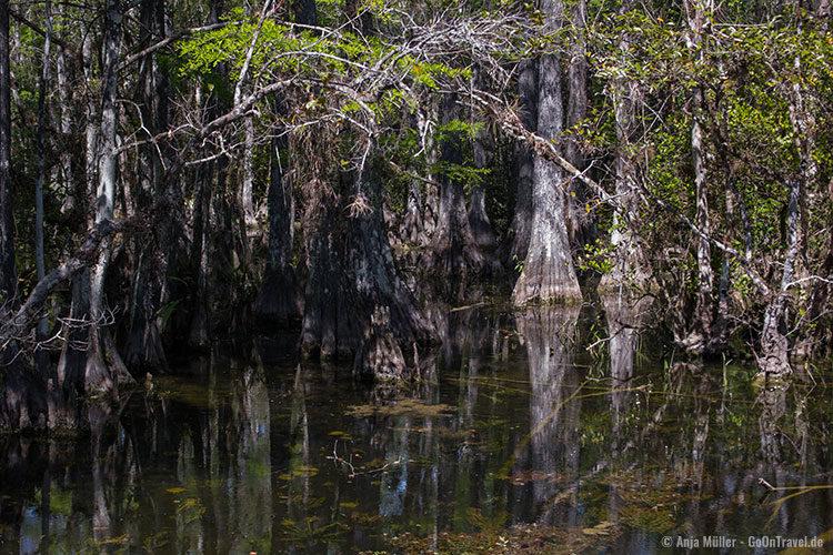 Blick in die Sümpfe - wo lauern die Aligatoren?