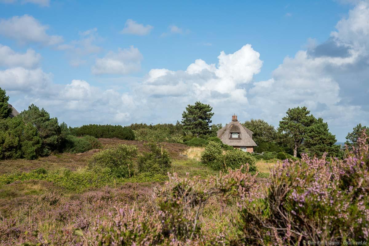 Ein Reetdachtraumhaus in der Heide