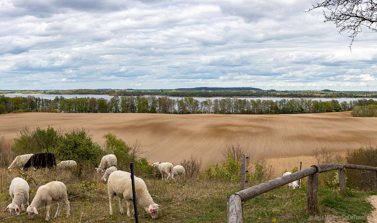 Parsteiner See und grasende Schafe