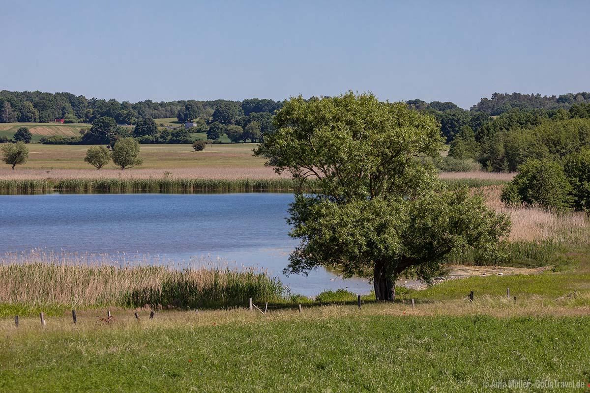 Blick auf das südliche Ufer vom Grimnitzsee