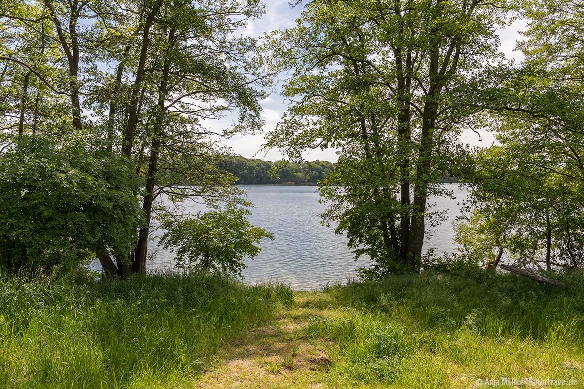 Blick auf das Ufer vom Großen Buckowsee