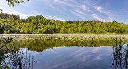 Seen in Brandenburg: 14 idyllische Seen im Barnim nördlich von Berlin