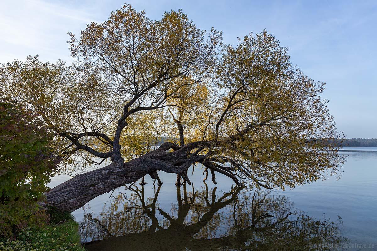 Am Ufer des Werbellinsees