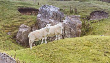 Brecon Beacons Nationalpark: Rundreise durch den Süden von Wales