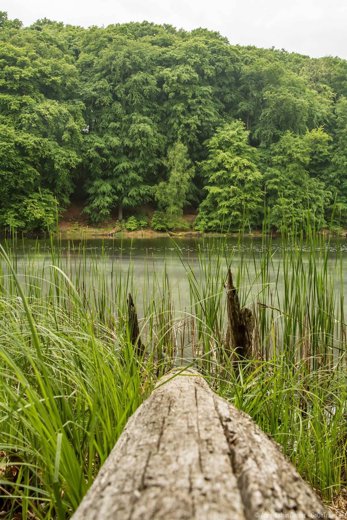 Waldsee im Grumsiner Buchenwald