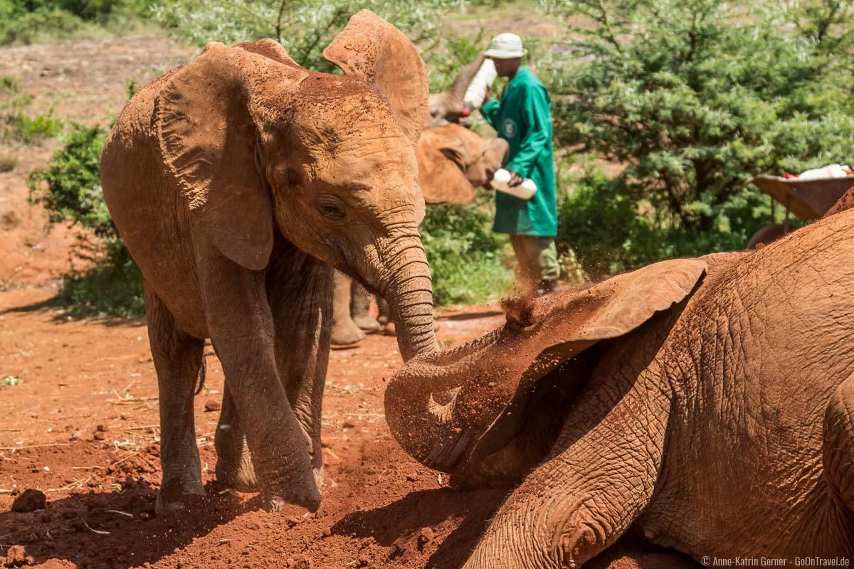 Elefantenwaisen im Sheldrick Wildlife Trust am Nairobi Nationalpark
