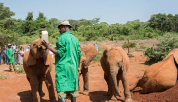 Zu Besuch im David Sheldrick Wildlife Trust in Nairobi