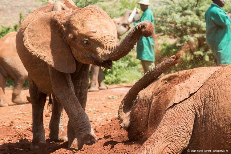 spielende Elefanten im DSWT