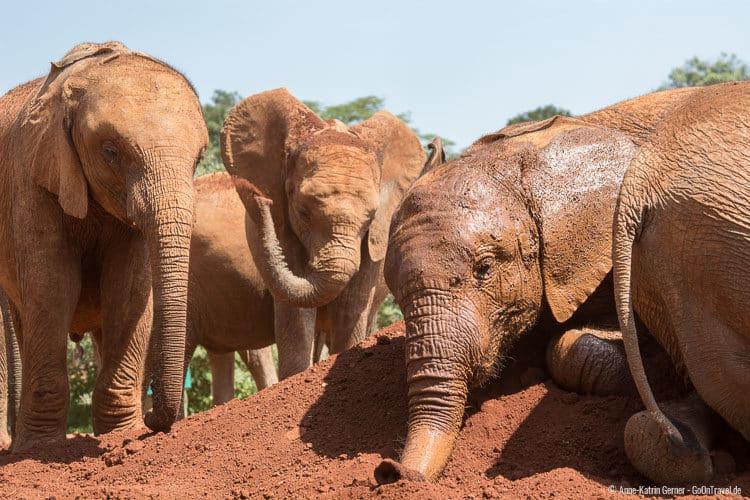 Elefantenwaisen beim Sandbad