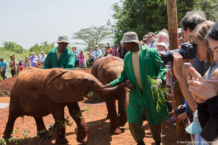den Elefantenwaisen ganz nah