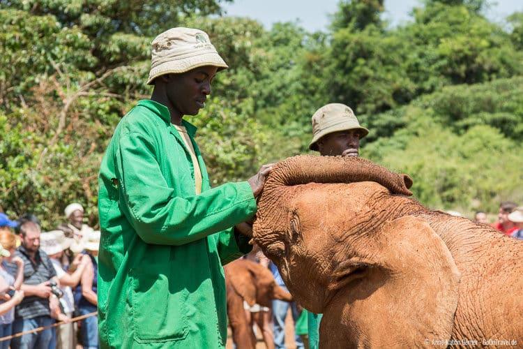 eine starke Bindung zwischen Pfleger und Elefant