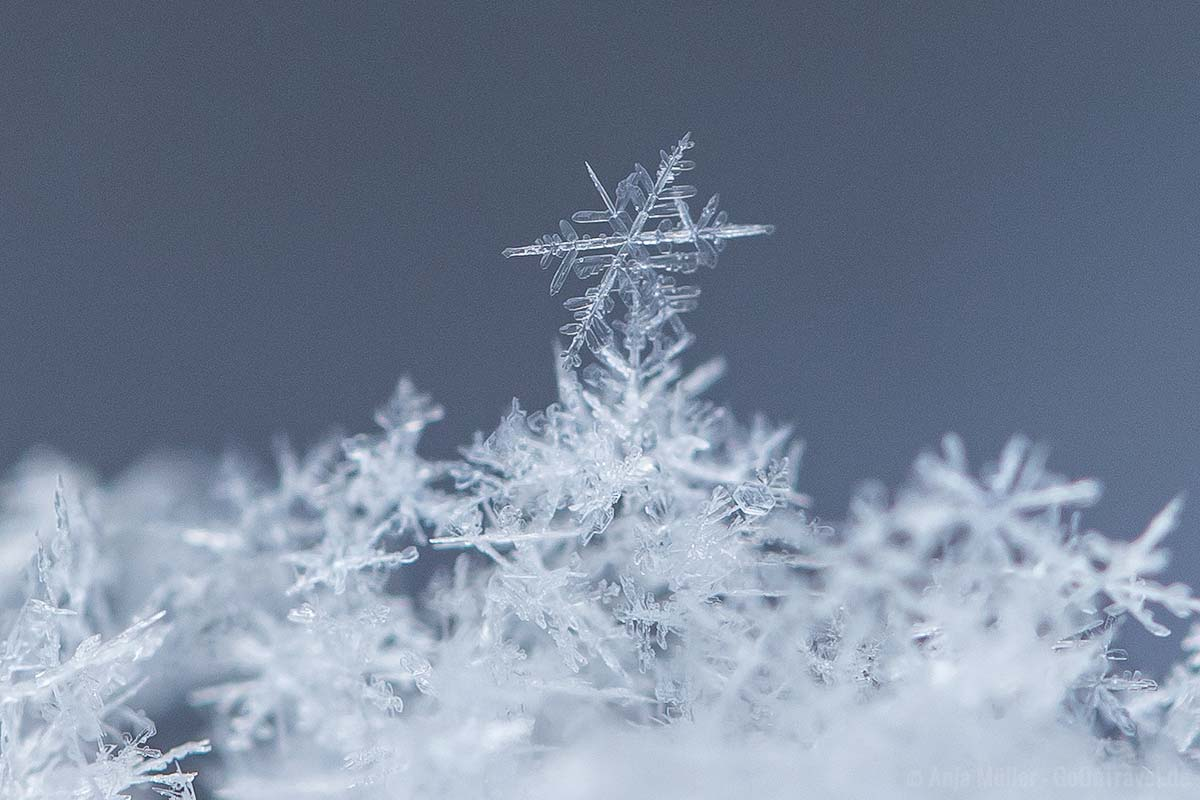 eine Schneeflocke = viele Eiskritalle
