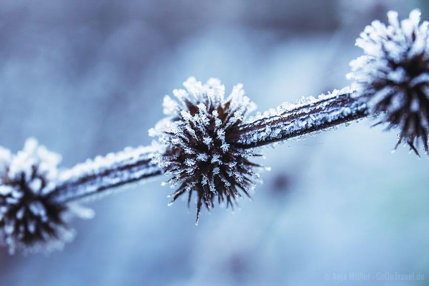 Eiskristalle auf einer Pflanze